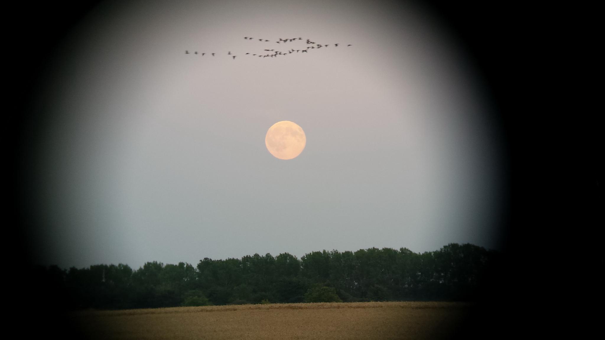 Blue-Moon-und-Gänse-20150731